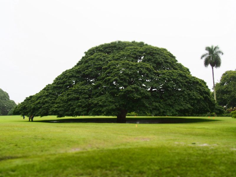 このー木何の木