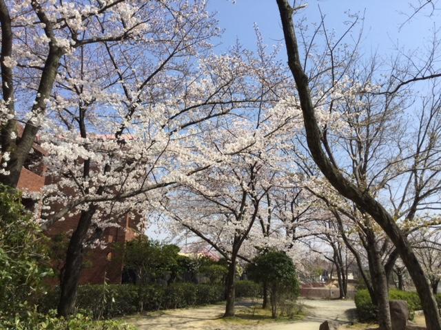 桜芦原公園IMG_0812