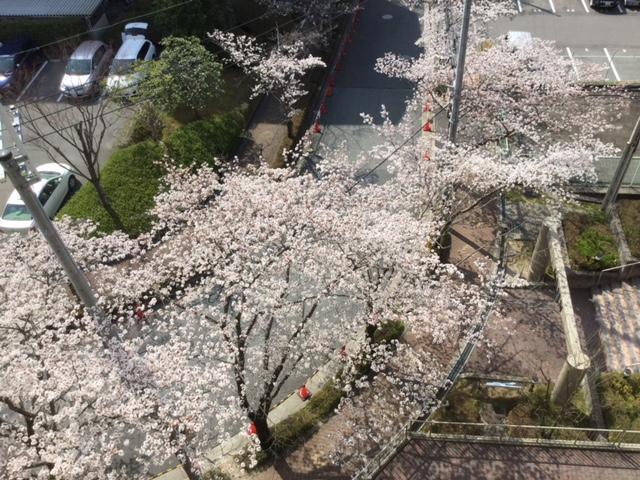 桜マンションIMG_0822