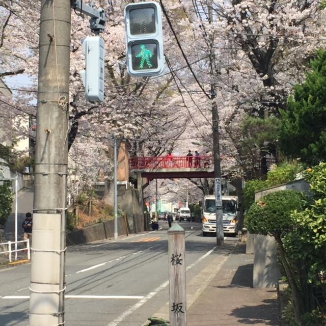 桜坂IMG_0830
